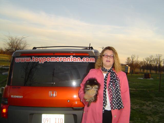 teacup pomeranian puppies for free. Toy Pomeranian Toy Pomeranian